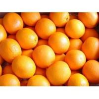 Buy cheap Fresh Foods Fresh Navel Orange GT8007 from wholesalers