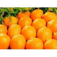 Buy cheap Sugar Mandarin  Navel Orange from wholesalers
