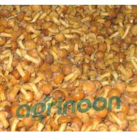 Buy cheap Frozen Nameko Mushroom product