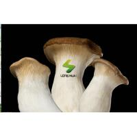 Buy cheap Fresh foods Fresh King Oyster Mushroom product