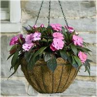Buy cheap Green Wire Hanging Basket With Coco Liner from wholesalers