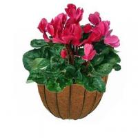 Buy cheap Decorative Wall Planter from wholesalers