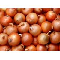 Buy cheap Fresh yellow onion from wholesalers