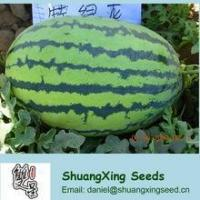 Buy cheap Emperor No.1Big f1 hybrid watermelon seed product