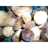 Buy cheap Mushroom NAME: Frozen Boletus Edulis from wholesalers