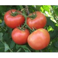 Buy cheap Vegetable Pink Tomato--DYT1227 from wholesalers