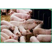 Buy cheap Livestock Feed Ingredients/ Turkey Feed Ingredients Better Nutrition ZWE-2 product