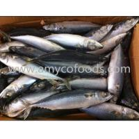 Buy cheap Pacific mackerel WR product
