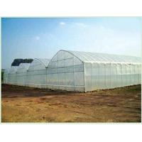 Single arch greenhouse/Tunnel greenhouse Single arch greenhouse/Tunnel greenhouse