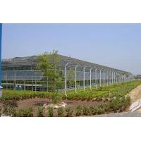 Buy Replacement Toughened Safety Glass For A Greenhouse