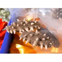 Buy cheap Frozen Dry Sea Cucumber from wholesalers
