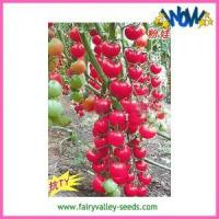 Buy cheap Anti TY Virus Pink Cherry Tomato Seeds New Generation - pink baby from wholesalers