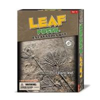 Buy cheap Deluxe Authentic Fossil Leaf Dig Kit, 6 asstd. product
