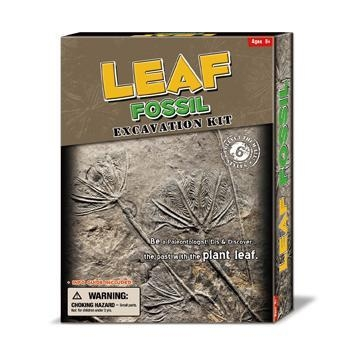 Buy cheap Deluxe Authentic Fossil Leaf Dig Kit, 6 asstd. from wholesalers
