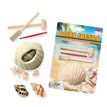 Buy cheap Ocean Fossils (Sea Shell) Dig Kit, 6 assorted from wholesalers