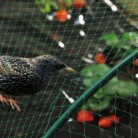 Buy cheap Wire Netting - Plastic Bird Control Net from wholesalers