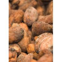 Buy cheap Criollo Cacao Beans from wholesalers