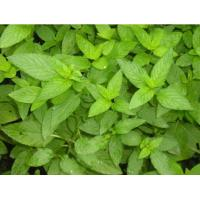 Buy cheap Mint Seasoning Powder from wholesalers