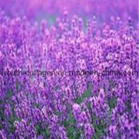 Buy cheap 100% Natural Lavender Pollen Tablets from wholesalers