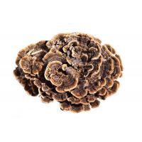 Buy cheap Coriolus Versicolor Extract from wholesalers
