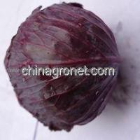 China Purple Cabbage on sale