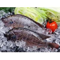 Buy cheap Frozen tilapia from wholesalers