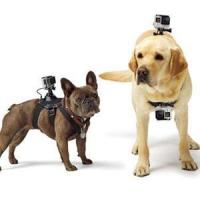 Buy cheap GoPro Fetch (Dog Harness) GoPro Fetch (Dog Harness) from wholesalers