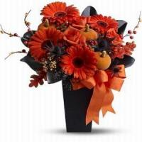Buy cheap Jack O'Lantern Blooms NO.12 taipei flower delivery from wholesalers