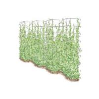 Buy cheap Vegetable Gardening Tall Expandable Pea Trellis from wholesalers