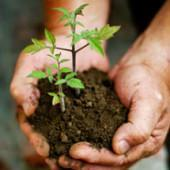 Buy cheap Organic Gardening Soils from wholesalers