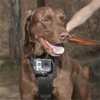 Buy cheap Gopro mounting system for Dog Gopro accessories from wholesalers