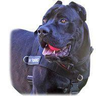 Buy cheap SAR Lightweight Nylon Cane Corso Harness for Working Dogs from wholesalers