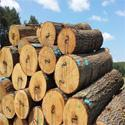 Buy cheap SOFT WOOD from wholesalers
