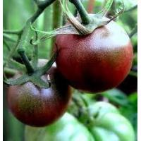 Buy cheap Black Cherry Organic Tomato Seeds from wholesalers