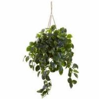 Buy cheap 36 Pothos Hanging Basket UV Resistant (Indoor/Outdoor) from wholesalers