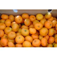 Buy cheap Fruits Nanfeng mandarin orange from wholesalers