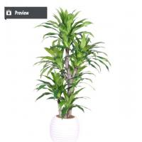 Buy cheap Best selling items large plastic ficus bonsai tree for outdoo from wholesalers