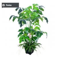 Buy cheap Realistic interior and exterior bonsai ficus tree for corner from wholesalers