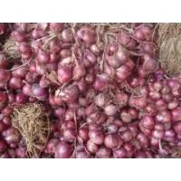 China Fresh Purple Onion on sale
