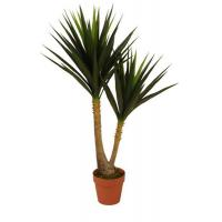 Buy cheap Trees&Plants from wholesalers