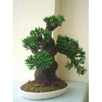 Buy cheap BONSAI CLAY BONSAI CLAY 17 from wholesalers