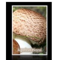 Buy cheap Agaricus blazei extract from wholesalers