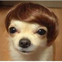Buy cheap Funny Toys Wig for Pet Dog from wholesalers