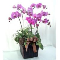China Mixed Flowers Bouquet Details Phalaenopsis Orchid Purple 8 Sprays on sale