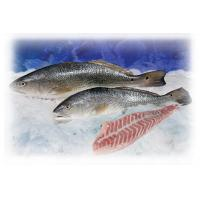 Buy cheap Redfish / Red Drum product