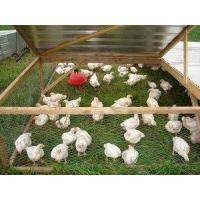 Buy cheap Pastured Chicken from wholesalers