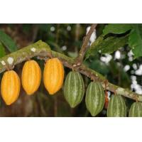 Buy cheap Cocoa from wholesalers