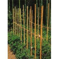 Buy cheap Description Canes USES OS BAMBOO CANES from wholesalers