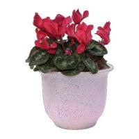 Buy cheap Poly-Resin flower pot with 12 LED from wholesalers
