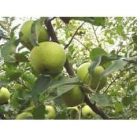 Buy cheap Apple Extract (Proanthocyanidins) from wholesalers